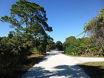 Leafy Lemon Avenue. Lovely stroll to beach!