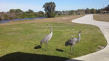 Cranes front of Villa