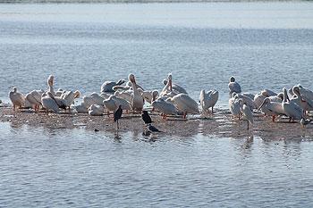 Abundant bird life.