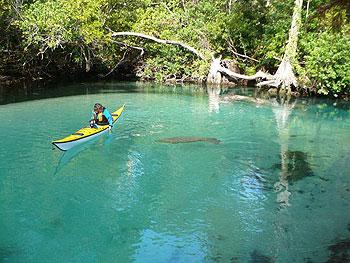 Weeki Wachee River - kayak and manatee